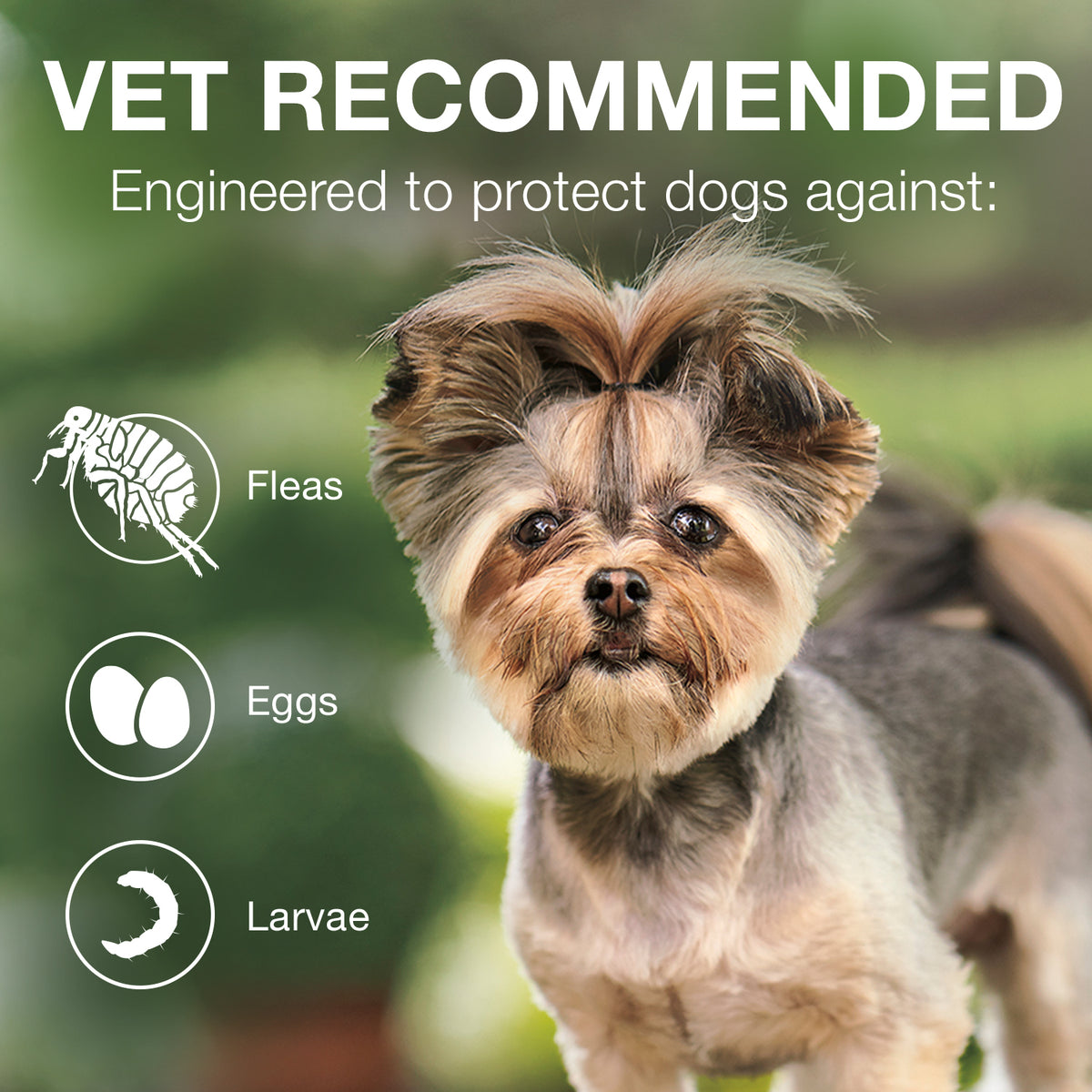 Advantage® II Flea Treatment for Extra Large Dog 6 Dose