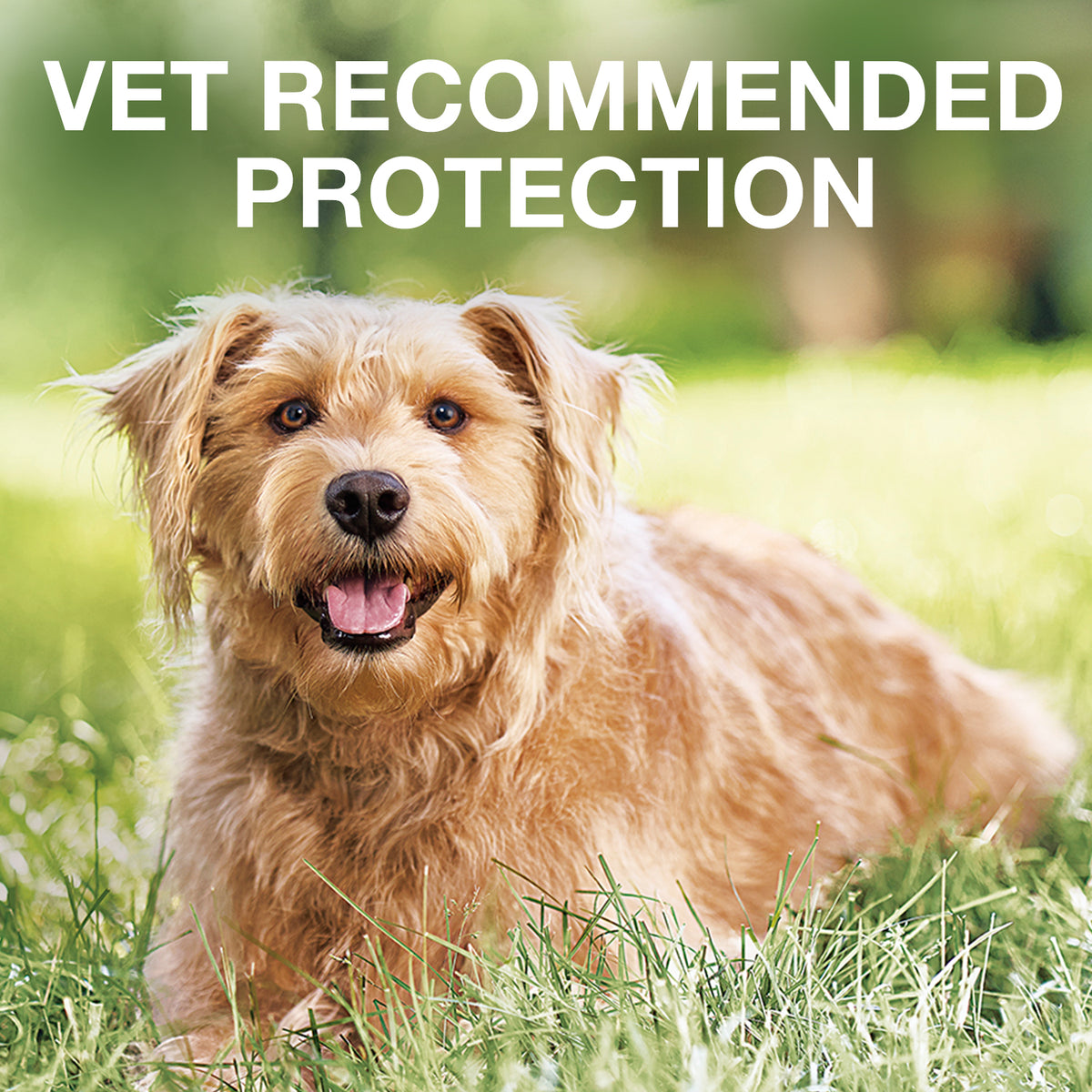 K9 Advantix® II Flea & Tick Treatment for Medium Dog 4 Dose
