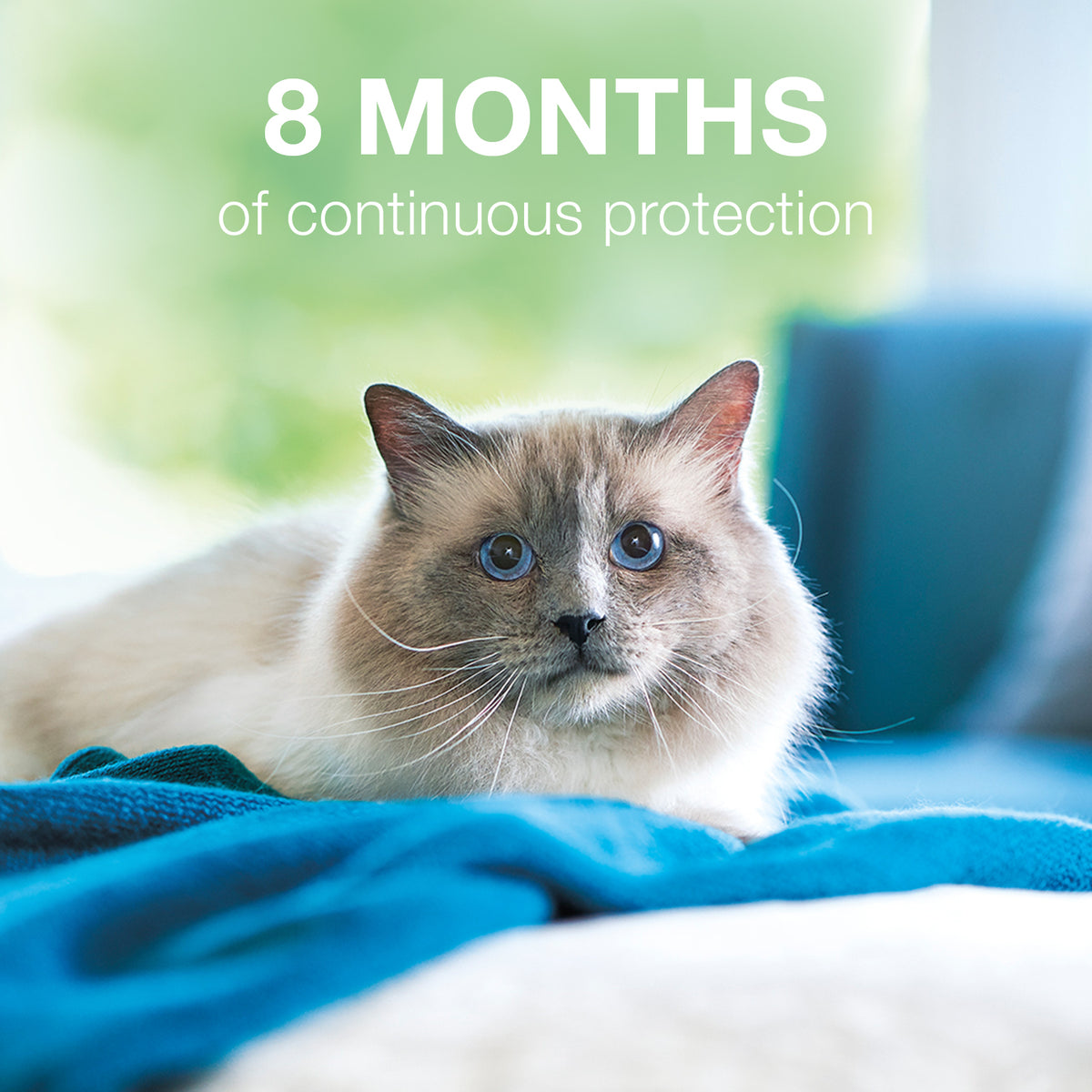 Seresto™ Flea & Tick Collar for Cat