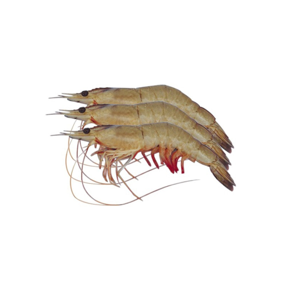 White Whole Prawns,<br>41/50 (800g) Ocean Food