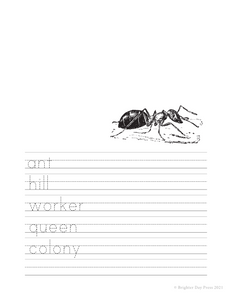 Ants Unit Study - Instant Digital Download
