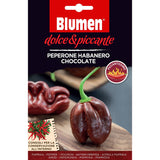 Blumen Peperone Seeds