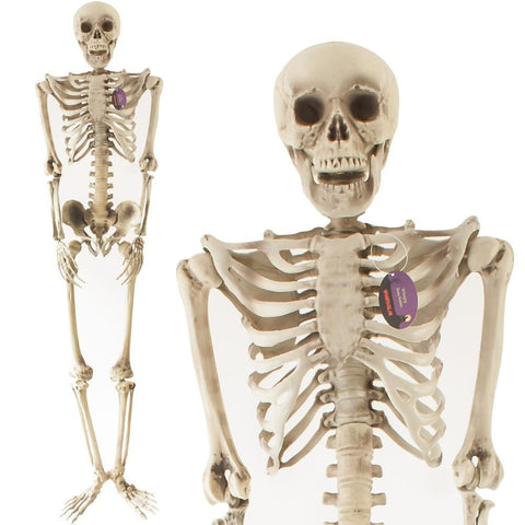 5ft Hanging Boney Skeleton