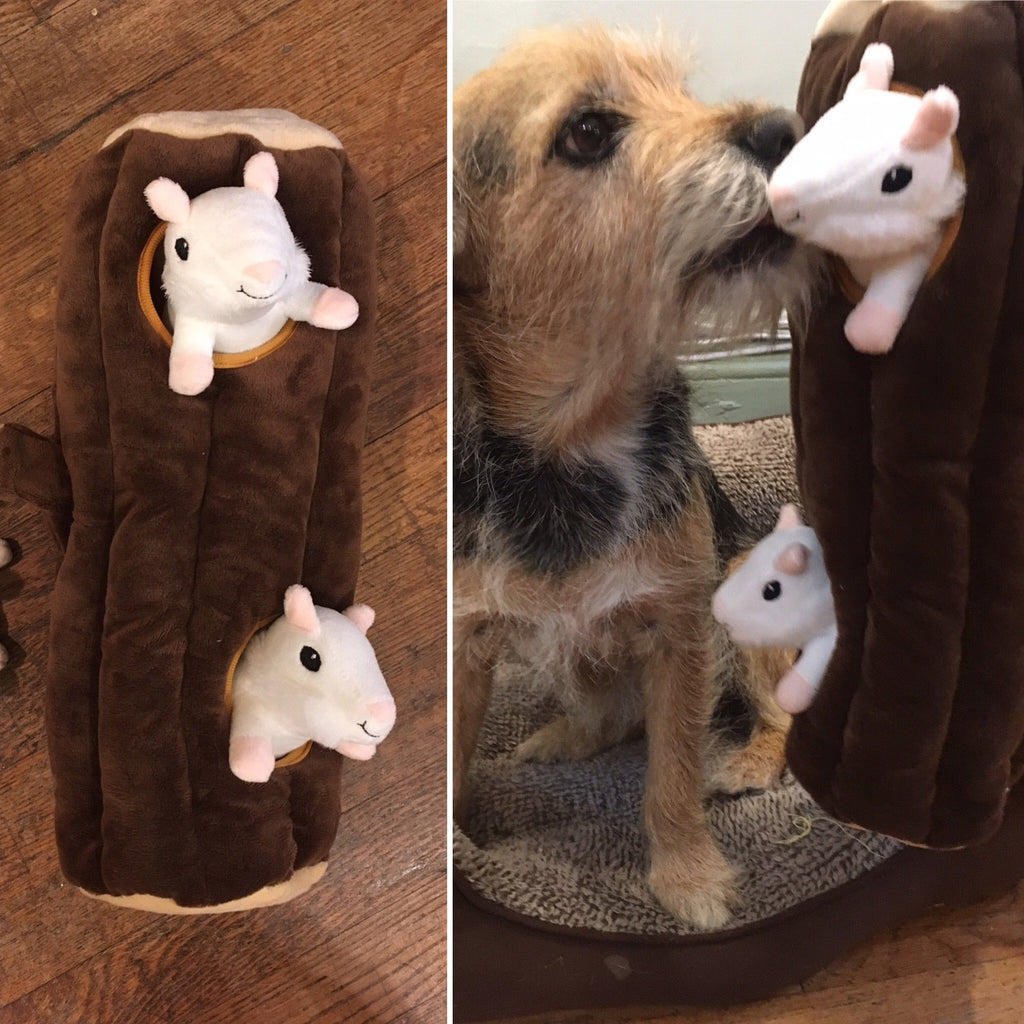 For Your Dog Who Love Squirrels