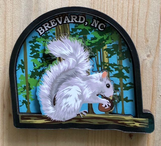 Magnet - Wooden Dimensional White Squirrel in the Woods with Brevard, NC imprint