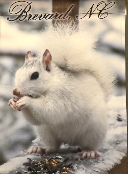 Flag - Official White Squirrel Exclusives