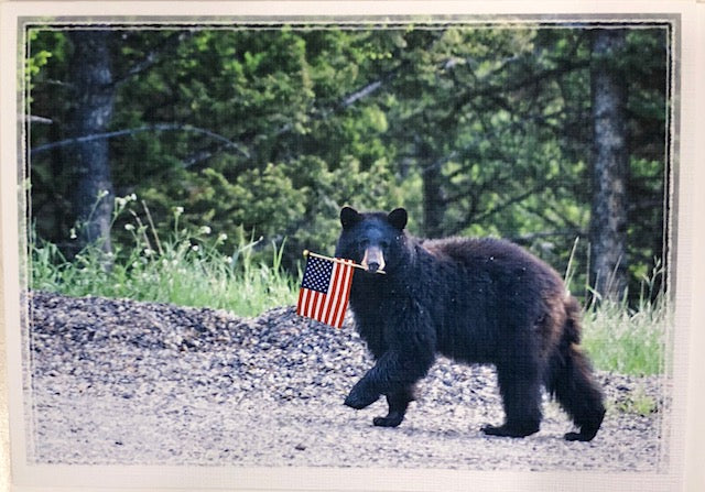 Notecards - Photo of a Black Bear with an American Flag