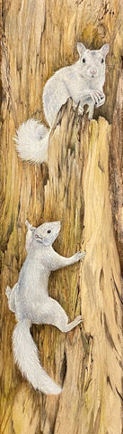 Art Print - White Squirrel Art Print by Lori Vogel.