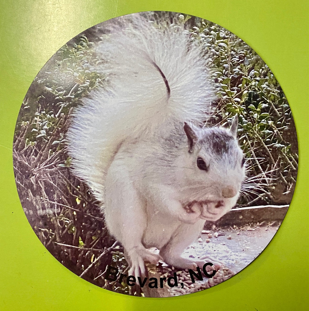 "Magnet - White Squirrel Photo with ""Brevard, NC"""