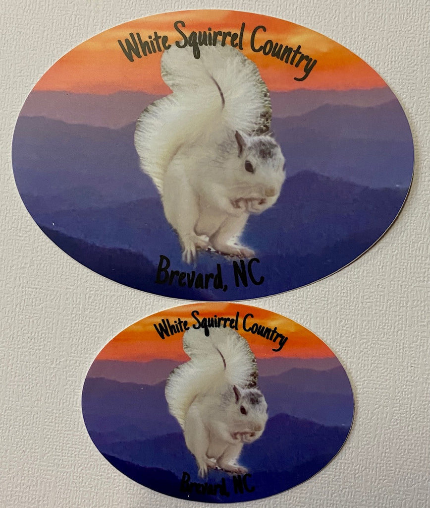 "Decal/Sticker - White Squirrel with words ""White Squirrel Country, Brevard, NC"""