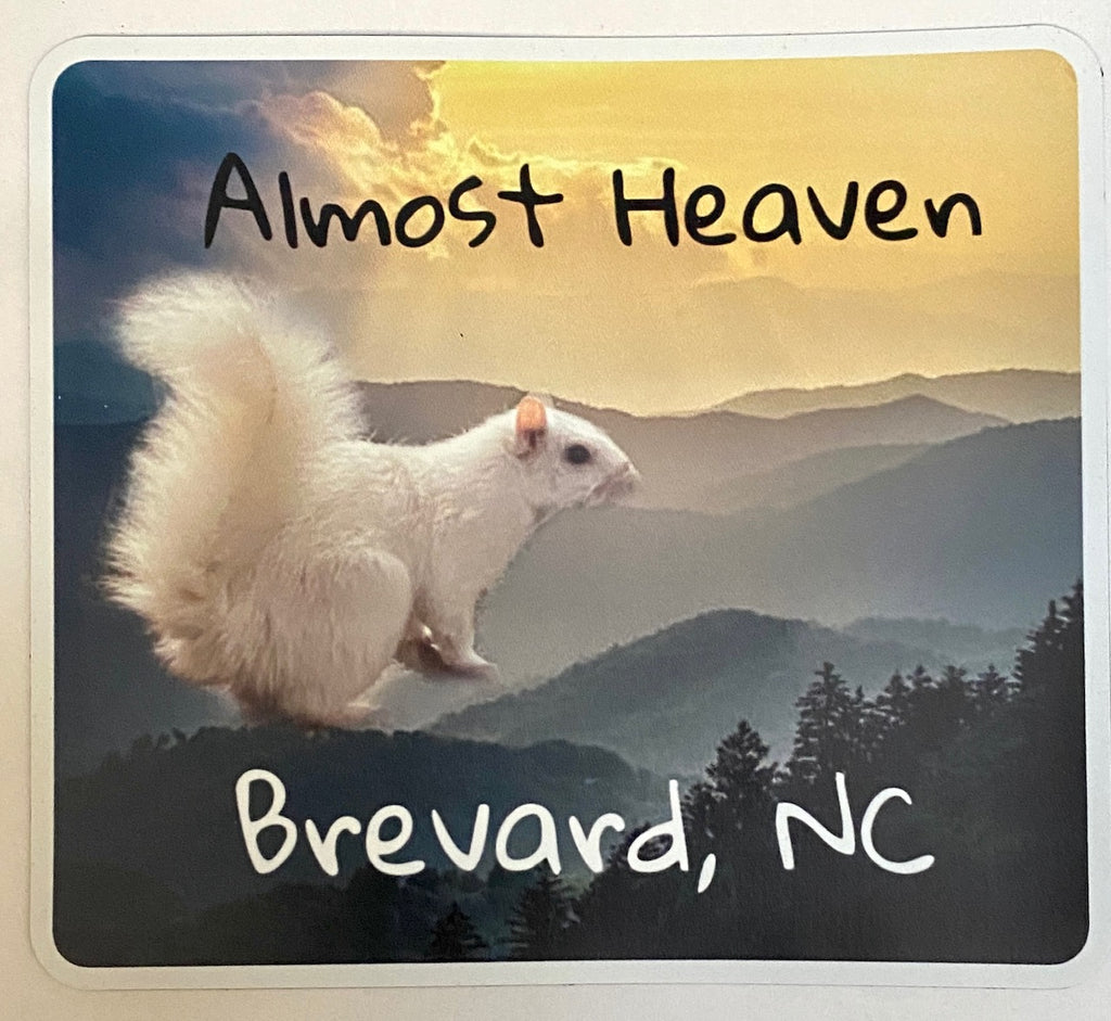 "Magnet - White Squirrel Photo with ""Almost Heaven, Brevard, NC"""