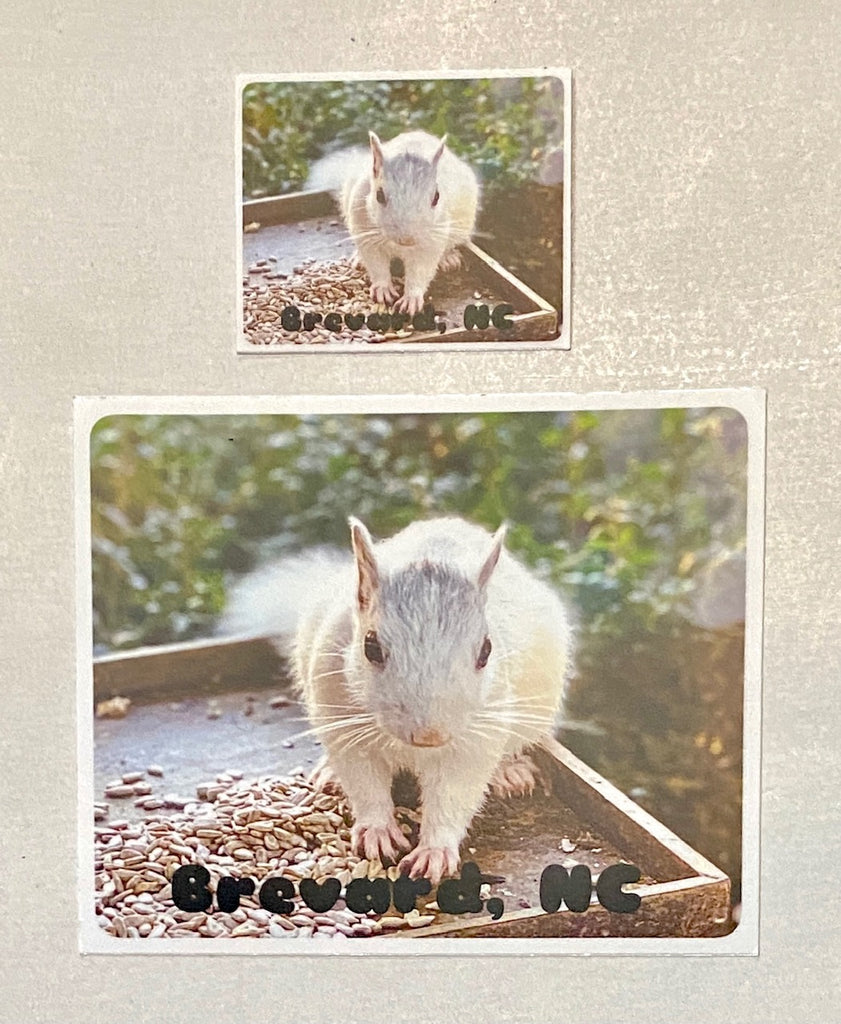 "Decal/Sticker - White Squirrel Photo Decal with words ""Brevard, NC"""