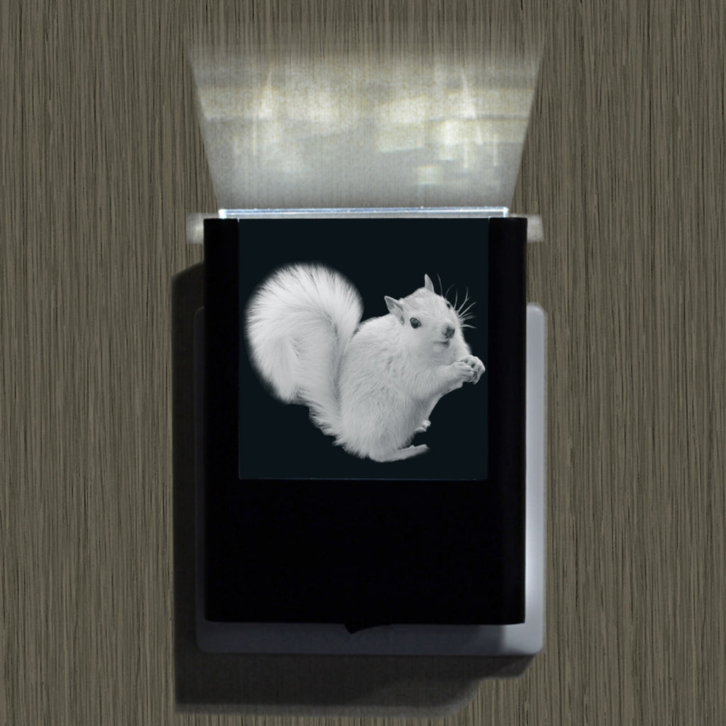Night Lights - White Squirrels, Bats or Waterfalls
