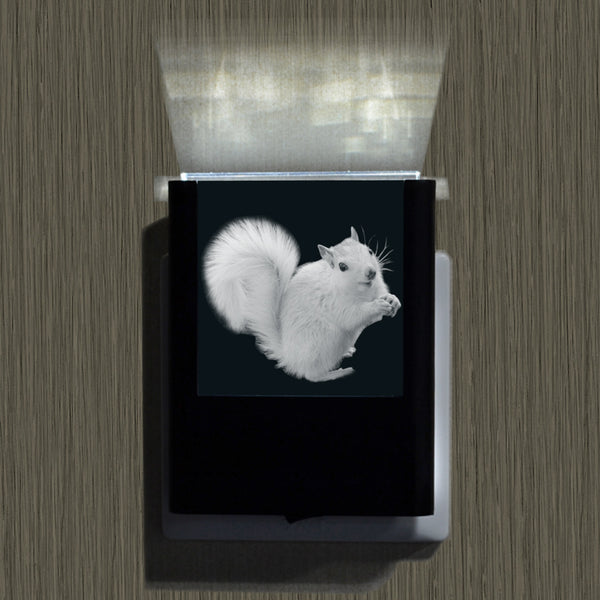 Night Light- White Squirrel and waterfalls