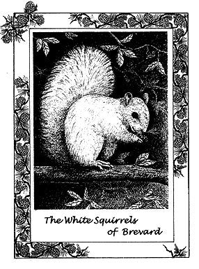 Notecards - White Squirrel Black and White from Brevard, NC #