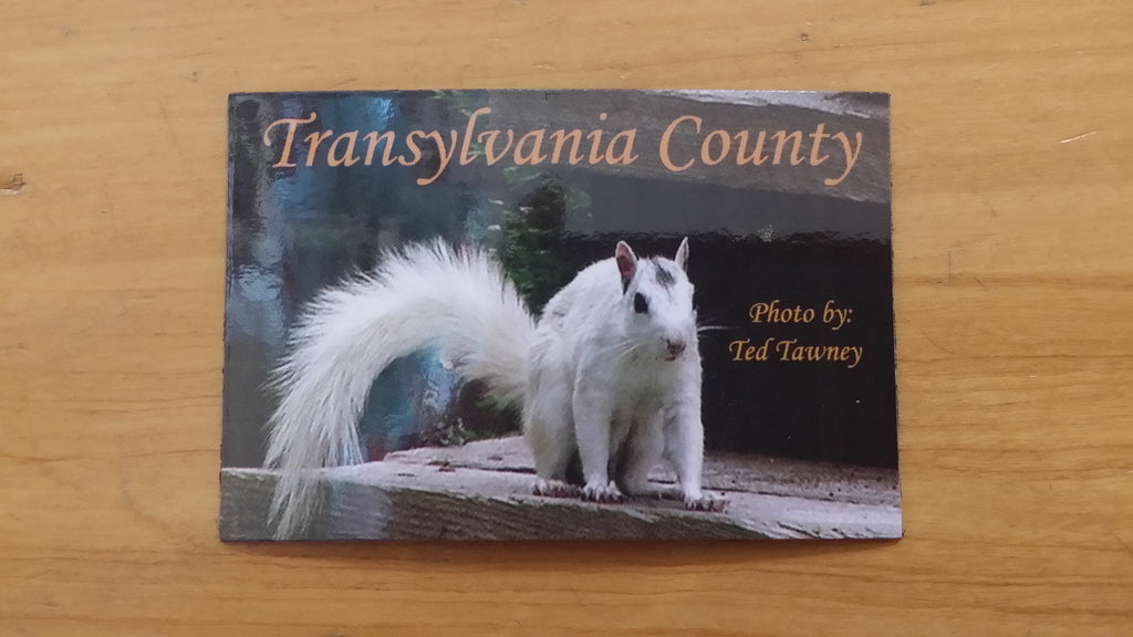 Magnet - White Squirrel Photograph #1 by Ted Tawney#