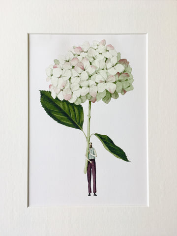 "Hydrangea ""In Bloom"" Mounted Print"