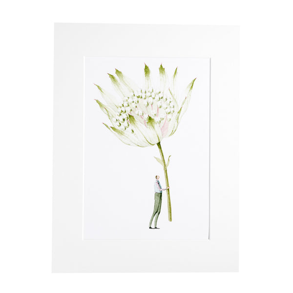 "Astrantia ""In Bloom"" Mounted Print"