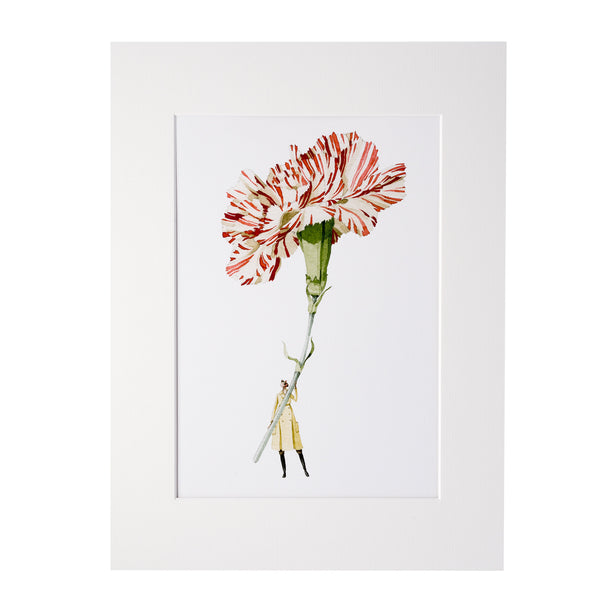 "Carnation ""In Bloom"" Mounted Print"