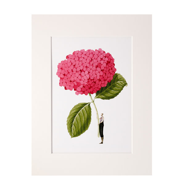 "Pink Hydrangea ""In Bloom"" Mounted Print"