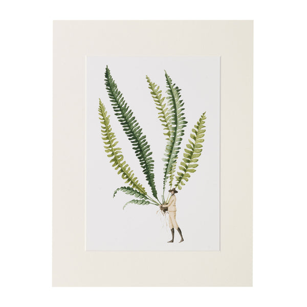 Fabulous Ferns - Fern 1 Print