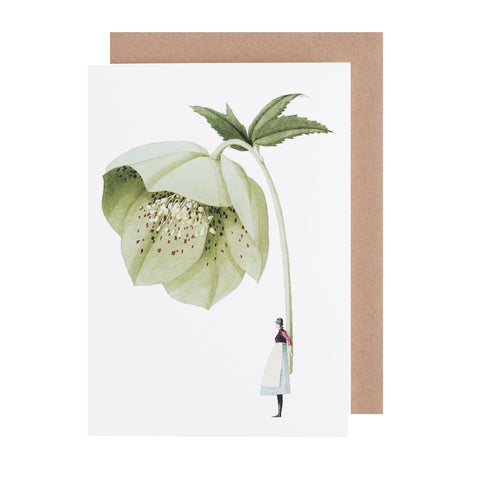 Greetings Card NEW - Hellebore
