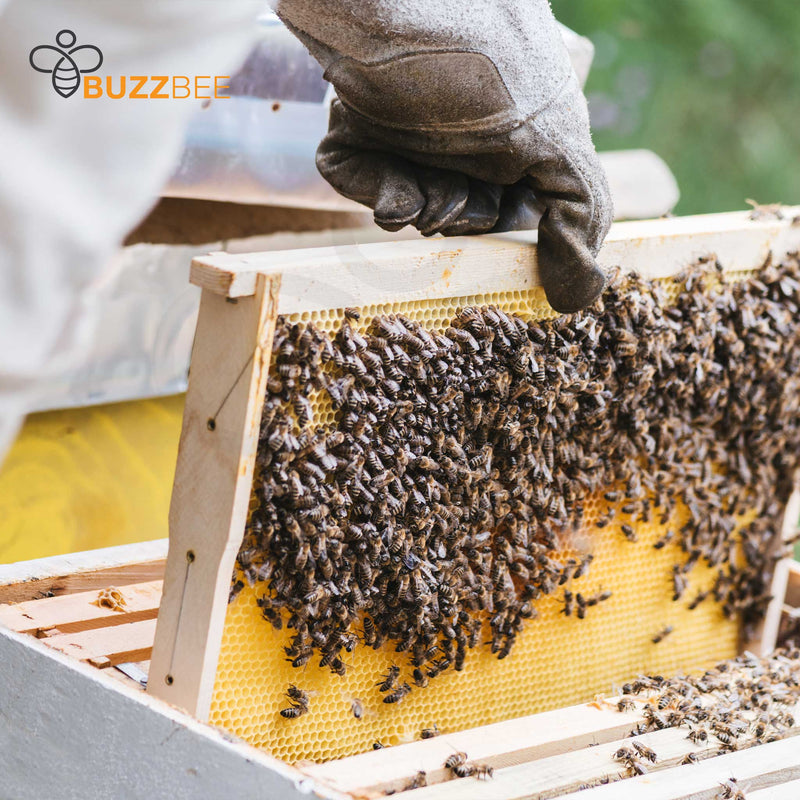 BUZZ-Pack: Nuc of Bees with mated Queen with optional Nuc Box^^ [DEPOSIT ONLY] - Buzzbee