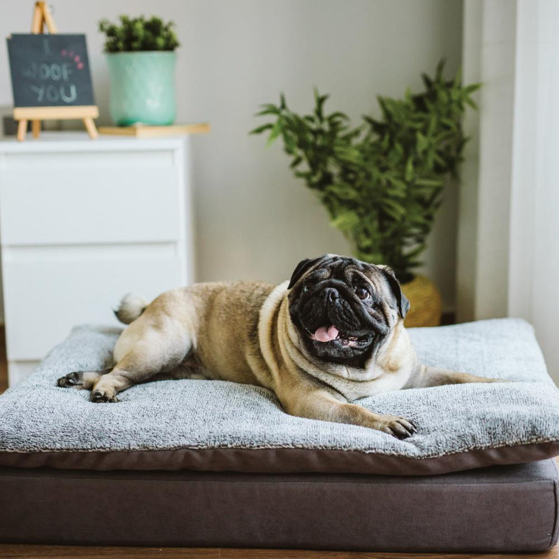 Lucas Pet Bed