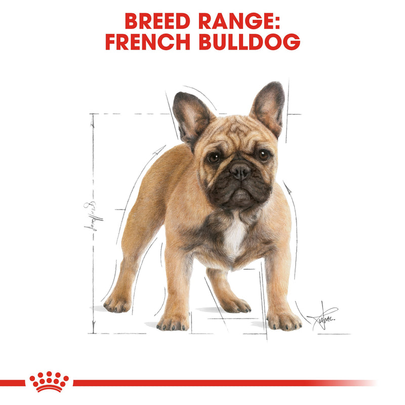 Royal Canin French Bulldog Adult (3 KG)- Dry food for adult dogs over 12 months - Amin Pet Shop