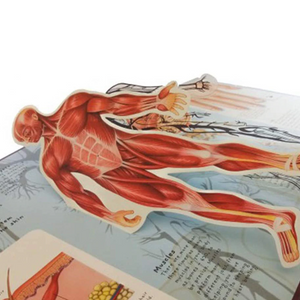 Human Anatomy 3D Education Book