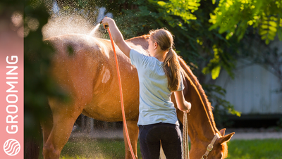 Why Would You Hot-Towel Instead Of Bathing The Horse?