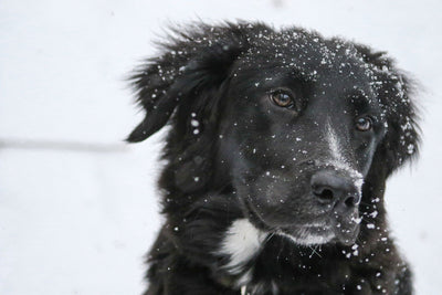 How To Care For Your Dog In Winter