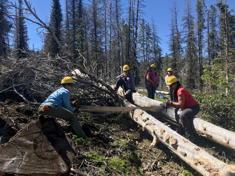 5 women using a 100 year old crosscut saw to clear a trail in Cascade, Idaho!