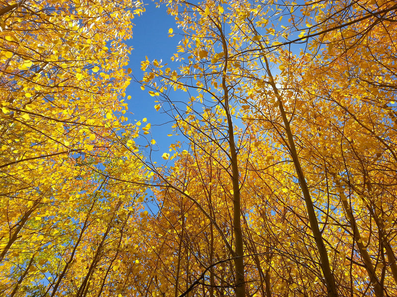 Winter Park, CO - Autumn Leaf Yoga and Hiking Petite Retreat - September 15 - 17