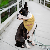 Fabolution Pet Bandana