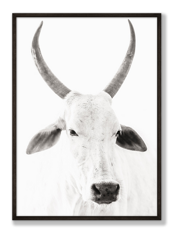 Striking black and white photo of a cow