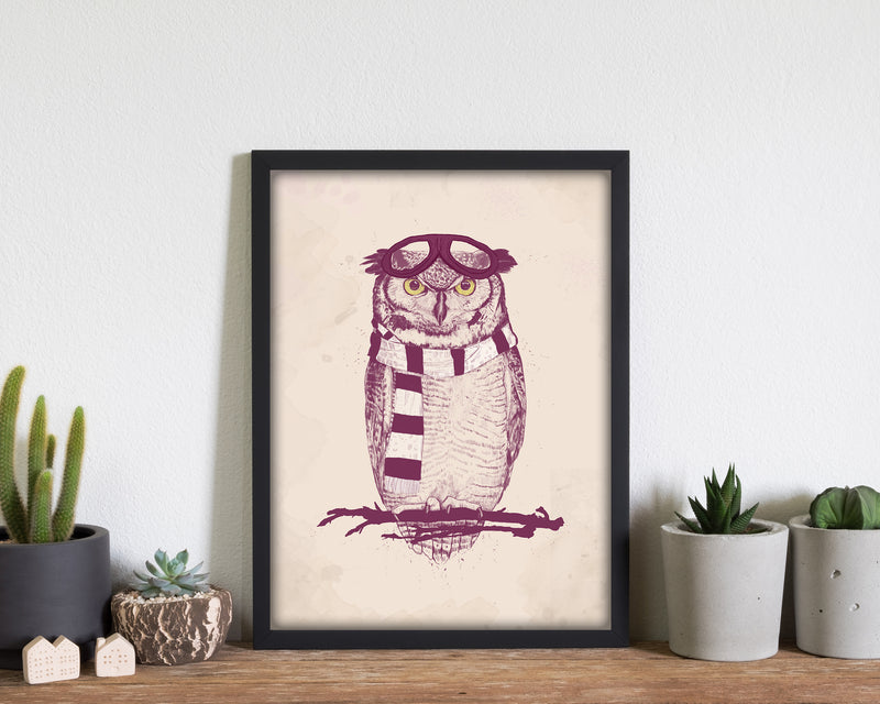 The Aviator Owl
