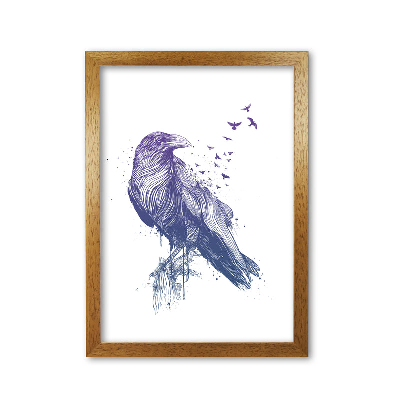Born To Be Free Raven Animal Art Print by Balaz Solti
