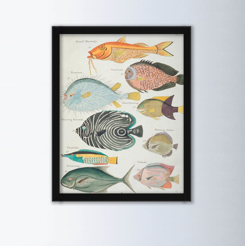 Baard Mannetji By Louis Renard Animal Art Print, Framed Art Print, Animal Wall Art