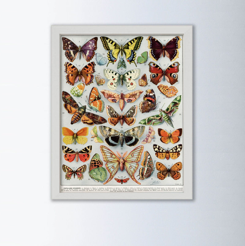 Papillons By Larousse Animal Art Print, Framed Art Print, Animal Wall Art