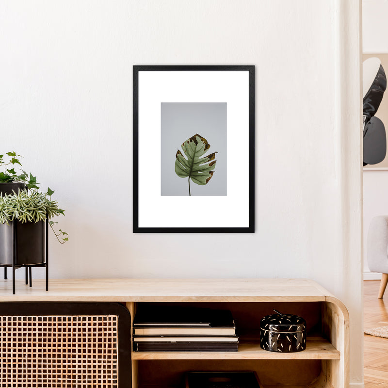 Old Leaf Grey Box  Art Print by Pixy Paper A2 White Frame