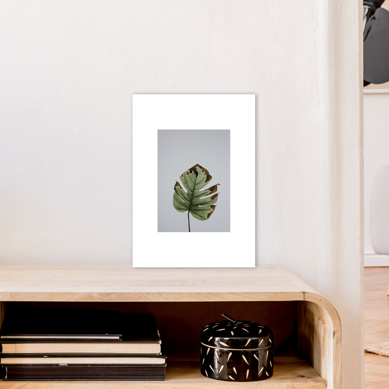Old Leaf Grey Box  Art Print by Pixy Paper A3 Black Frame
