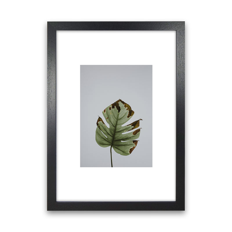 Old Leaf Grey Box  Art Print by Pixy Paper Black Grain