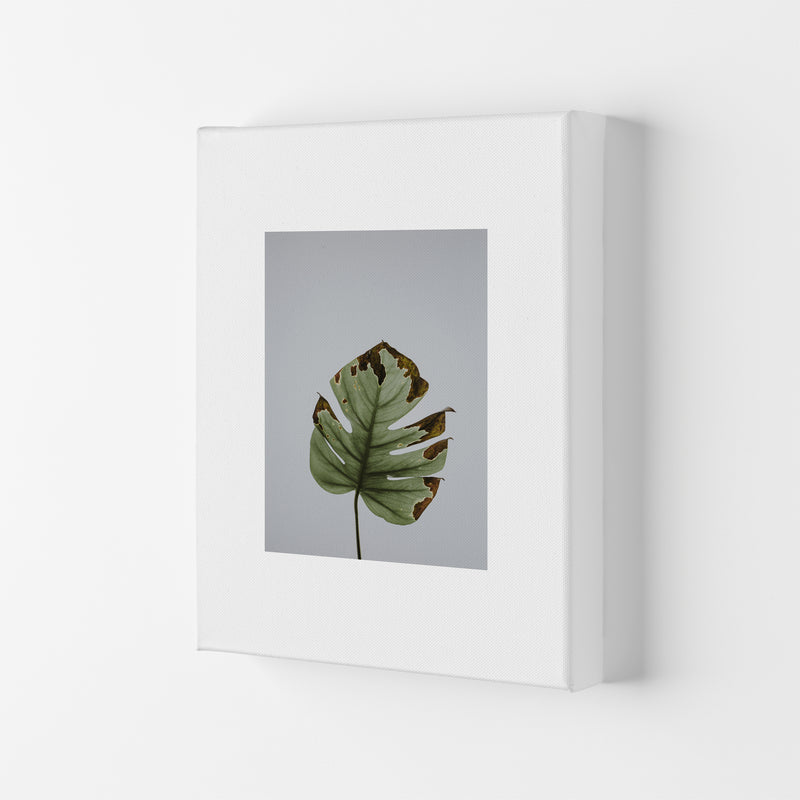 Old Leaf Grey Box  Art Print by Pixy Paper Canvas