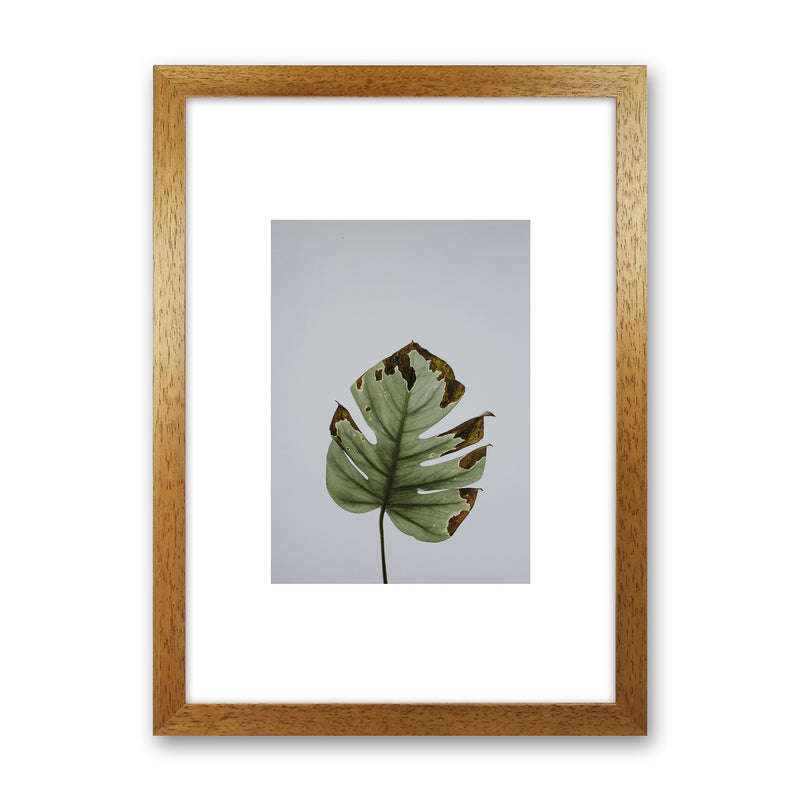 Old Leaf Grey Box  Art Print by Pixy Paper Oak Grain