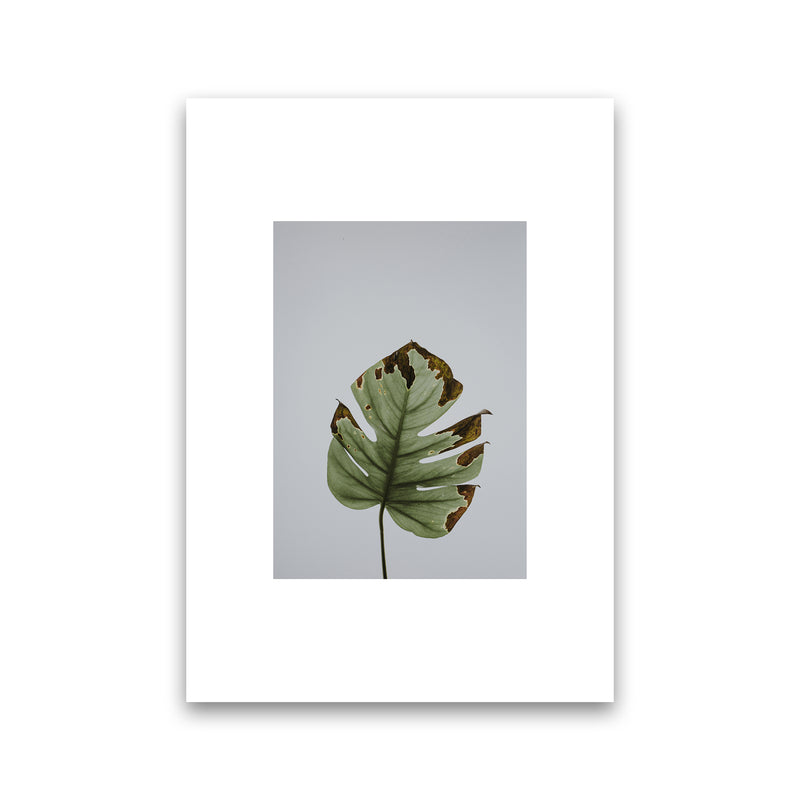 Old Leaf Grey Box  Art Print by Pixy Paper Print Only