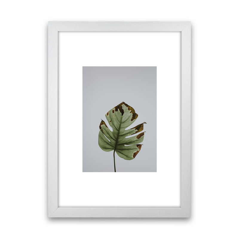 Old Leaf Grey Box  Art Print by Pixy Paper White Grain