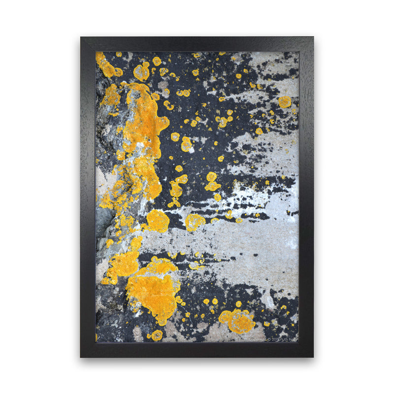 Yellow Moss On Grey Rock   by Ruth Holly A1 Black Frame