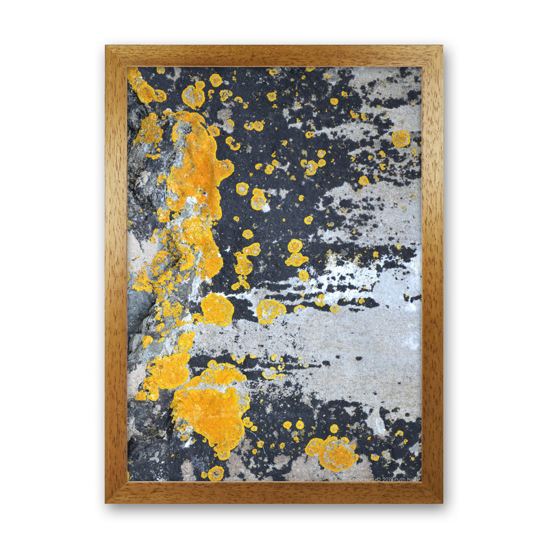 Yellow Moss On Grey Rock   by Ruth Holly A1 Oak Frame