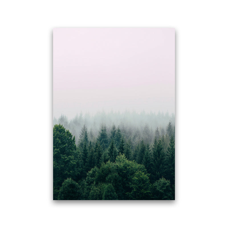 The Fog And The Forest I Print Only